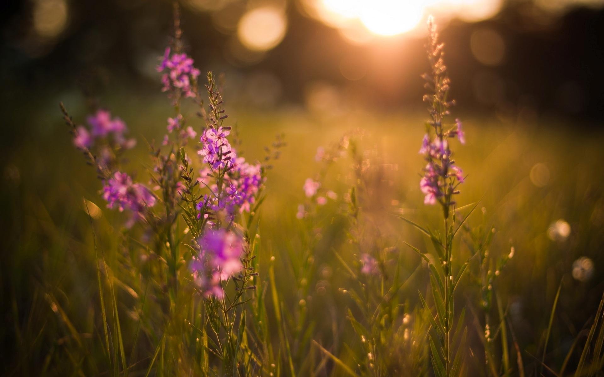 summer-evening-105161