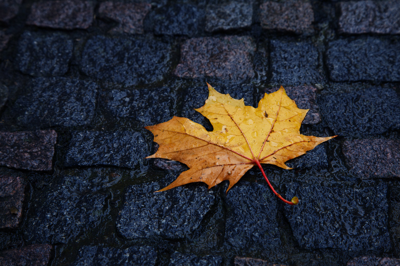 single-wet-leaf-in-autumn-11291402830efa